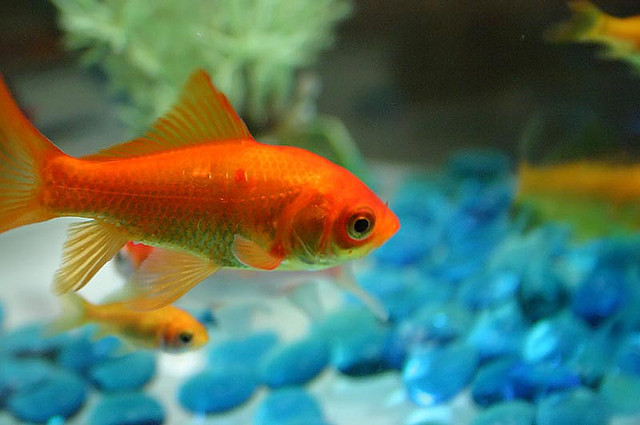 Feeling like a fish out of water? 3 Tips for Incoming Freshmen #college